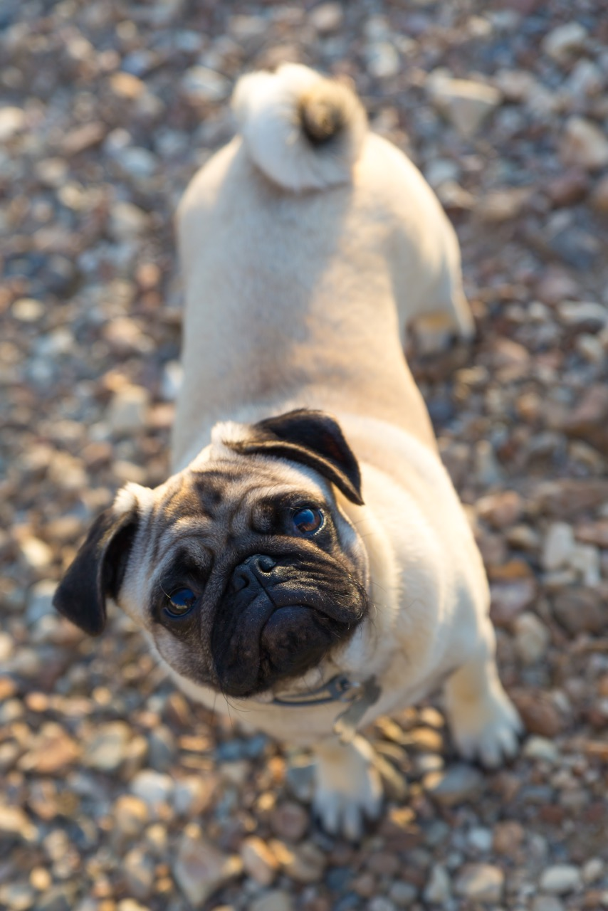 pet photography whitstable