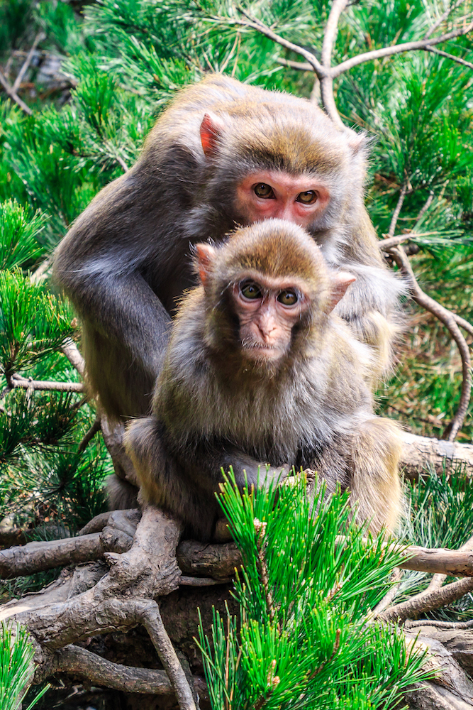 Monkeys Photography Holiday